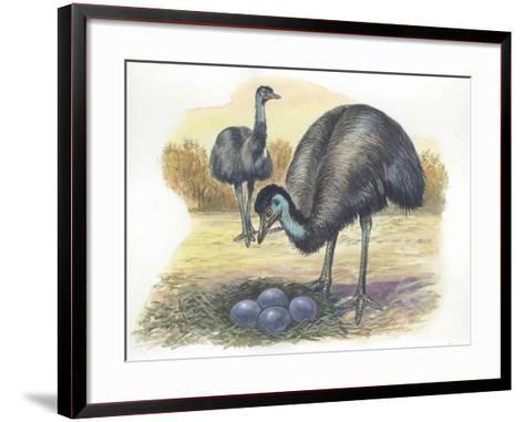 Emu Dromaius Novaehollandiae at Nest with Eggs--Framed Art Print