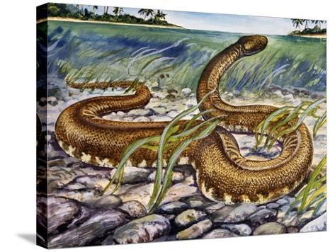 Elephant Trunk Snake (Acrochordus Javanicus), Acrochordidae--Stretched Canvas Print