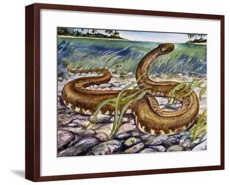 Elephant Trunk Snake (Acrochordus Javanicus), Acrochordidae--Framed Art Print