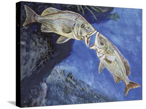 Blue-Striped Grunt (Haemulon Sciurus), Haemulidae--Stretched Canvas Print