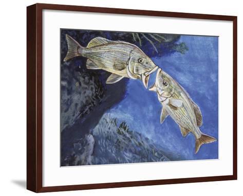 Blue-Striped Grunt (Haemulon Sciurus), Haemulidae--Framed Art Print