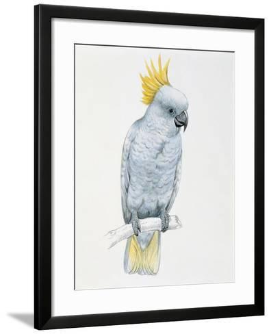Close-Up of a Sulfur Crested Cockatoo (Cacatua Galerita)--Framed Art Print