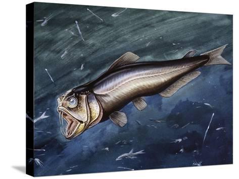 Sabertooth (Evermannella Atrata), Evermannellidae--Stretched Canvas Print