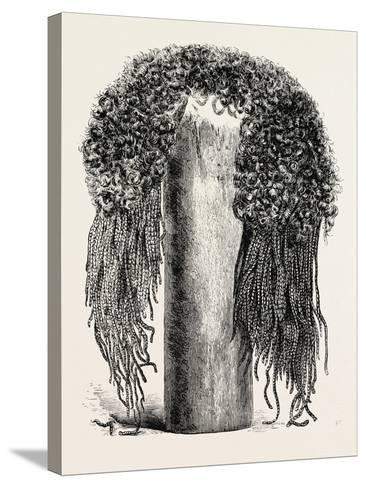 Old Egyptian Lady's Wig, in the British Museum, Egypt, 1879--Stretched Canvas Print