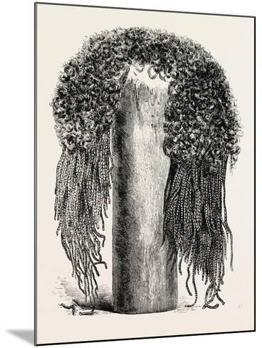 Old Egyptian Lady's Wig, in the British Museum, Egypt, 1879--Mounted Giclee Print