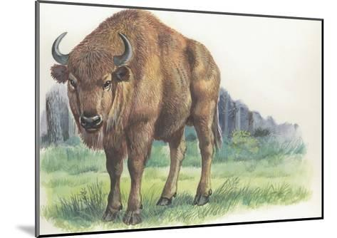 Close-Up of a Wisent Standing in the Forest (Bison Bonasus)--Mounted Giclee Print