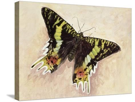 Madagascan Sunset Moth (Chrysiridia Rhipheus), Uraniidae--Stretched Canvas Print
