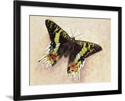 Madagascan Sunset Moth (Chrysiridia Rhipheus), Uraniidae--Framed Art Print