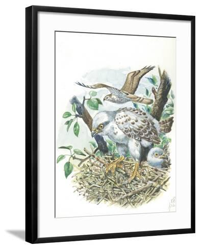 Young European Honey Buzzards Pernis Apivorus in Nest--Framed Art Print