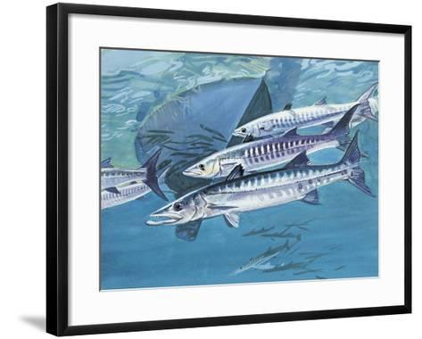 Close-Up of a Group of Great Barracuda Fish (Sphyraena Barracuda)--Framed Art Print