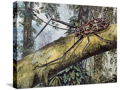 Harlequin Beetle (Acrocinus Longimanus), Cerambycidae--Stretched Canvas Print