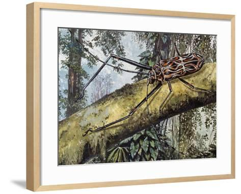 Harlequin Beetle (Acrocinus Longimanus), Cerambycidae--Framed Art Print
