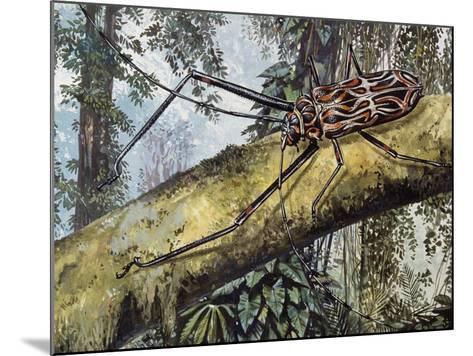 Harlequin Beetle (Acrocinus Longimanus), Cerambycidae--Mounted Giclee Print