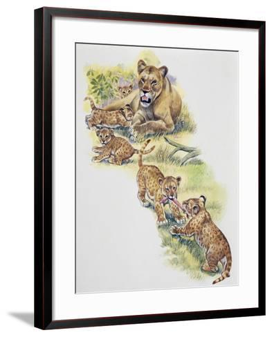 Lioness (Panthera Leo) with Her Cubs, Felidae--Framed Art Print