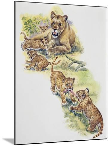Lioness (Panthera Leo) with Her Cubs, Felidae--Mounted Giclee Print