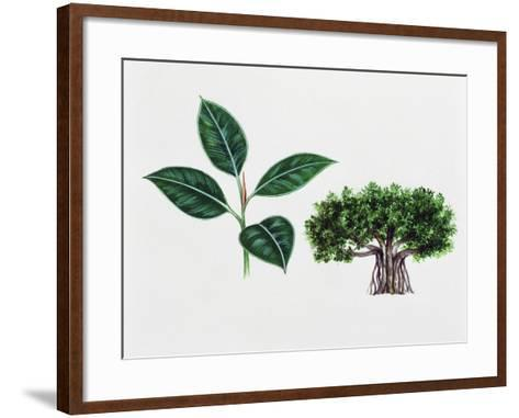 Moreton Bay Fig (Ficus Macrophylla), Moraceae, Tree and Leaves--Framed Art Print