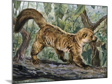 Eastern Lowland Olingo (Bassaricyon Alleni), Procyonidae--Mounted Giclee Print