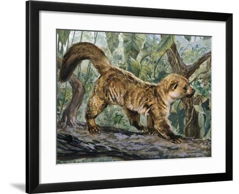 Eastern Lowland Olingo (Bassaricyon Alleni), Procyonidae--Framed Art Print