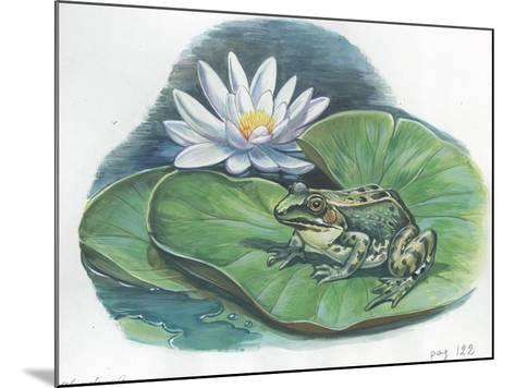 Edible Frog Rana Esculenta or Pelophylax Esculentus--Mounted Giclee Print
