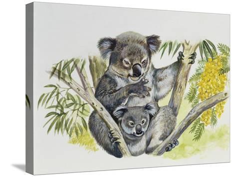 Koala Doe (Phascolarctos Cinereus) with Joey, Phascolarctidae--Stretched Canvas Print