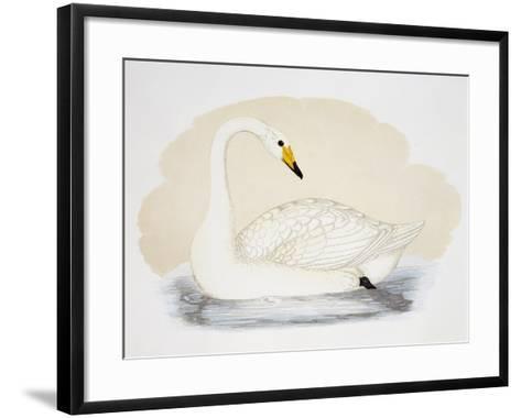 Wild Swan (Cygnus Cygnus), United Kingdom, 19th Century--Framed Art Print