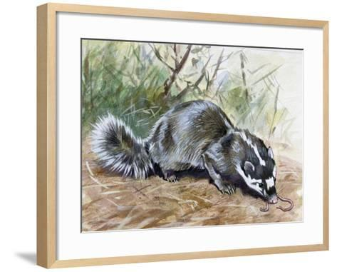 Chinese Ferret-Badger (Melogale Moschata), Mustelidae--Framed Art Print