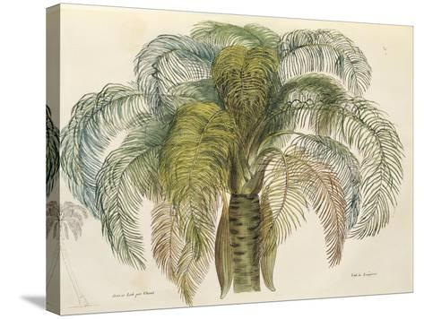 Coconut Palm Tree (Cocos Nucifera) by Choris, 1822--Stretched Canvas Print