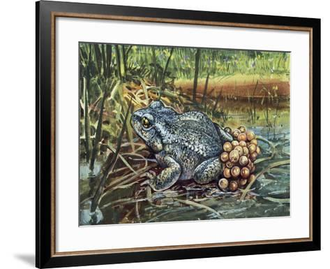 Close-Up of a Colorado River Toad Producing Eggs (Bufo Alvarius)--Framed Art Print