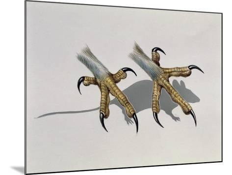 Close-Up of an Owl's Claws Reaching for a Mouse--Mounted Giclee Print