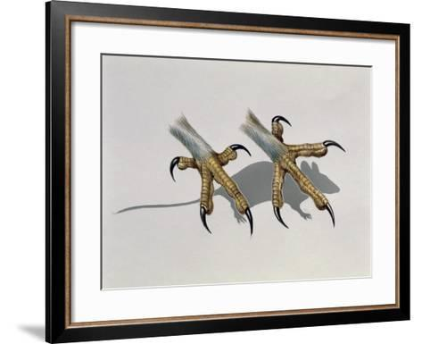 Close-Up of an Owl's Claws Reaching for a Mouse--Framed Art Print