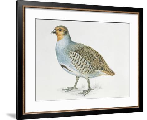 Close-Up of a Grey Partridge (Perdix Perdix)--Framed Art Print