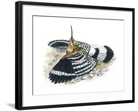 Birds: Coraciiformes, Hoopoe (Upupa Epops) Camouflaging--Framed Art Print