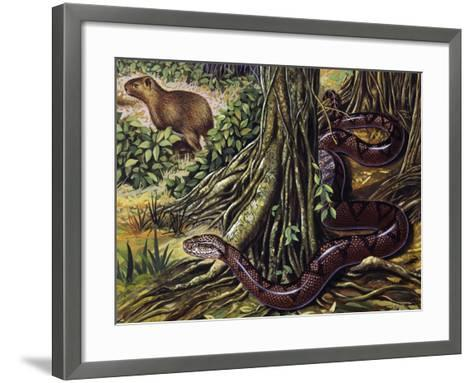 Atlantic Bushmaster (Lachesis Mutus), Viperidae--Framed Art Print