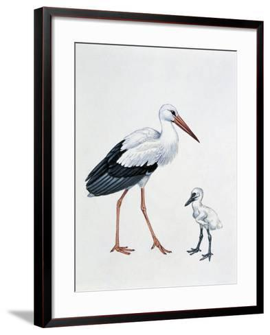 Close-Up of a White Stork with its Young (Ciconia Ciconia)--Framed Art Print