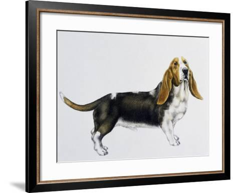 Basset Hound (Canis Lupus), Canidae, Drawing--Framed Art Print