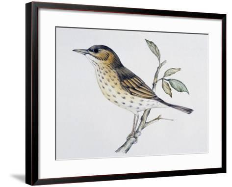 Song Thrush (Turdus Philomelos O Turdus Ericetorum), Turdidae--Framed Art Print