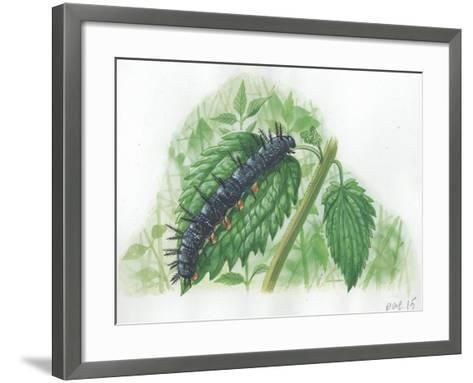 Caterpillar of European Peacock Butterfly Inachis Io--Framed Art Print