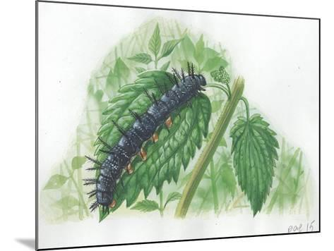 Caterpillar of European Peacock Butterfly Inachis Io--Mounted Giclee Print