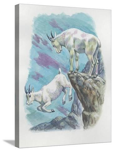 Close-Up of Two Mountain Goats (Oreamnos Americanus)--Stretched Canvas Print