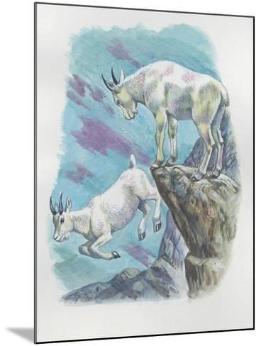 Close-Up of Two Mountain Goats (Oreamnos Americanus)--Mounted Giclee Print