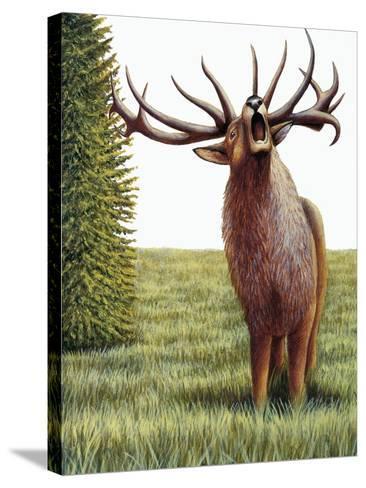 Red Deer Belling (Cervus Elaphus), Cervidae, Drawing--Stretched Canvas Print