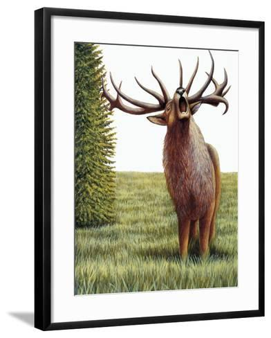 Red Deer Belling (Cervus Elaphus), Cervidae, Drawing--Framed Art Print