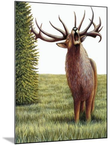 Red Deer Belling (Cervus Elaphus), Cervidae, Drawing--Mounted Giclee Print