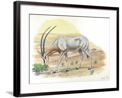 Gemsbok Oryx Gazella--Framed Art Print
