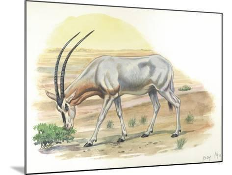Gemsbok Oryx Gazella--Mounted Giclee Print