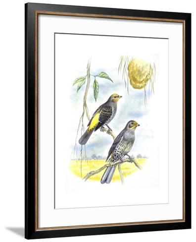 Birds: Piciformes, Couple of Honeyguide--Framed Art Print