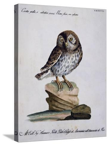 Yellow Owl, 19th Century--Stretched Canvas Print