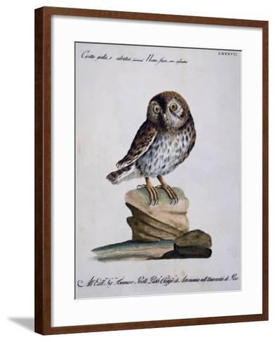 Yellow Owl, 19th Century--Framed Art Print