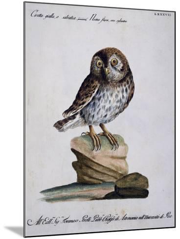 Yellow Owl, 19th Century--Mounted Giclee Print