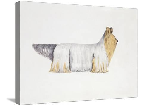 Clydesdale Terrier--Stretched Canvas Print